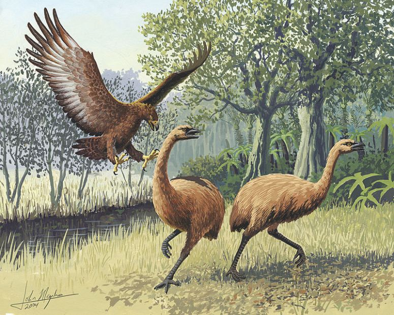 giant_haasts_eagle_attacking_new_zealand_moa