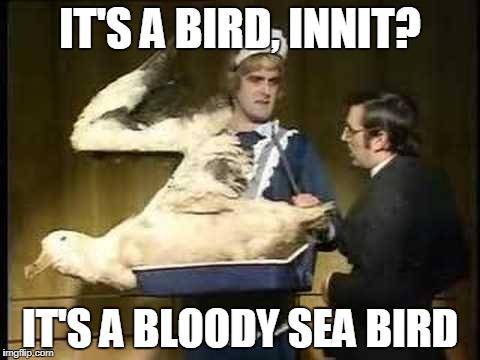 albatrossmeme.jpg