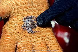blueringedoctopus2.jpg