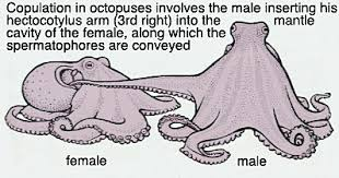 octopussex.jpg