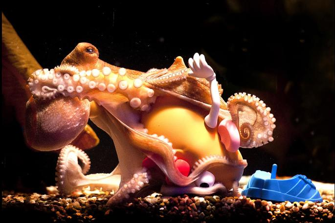 octopusmr.potatohead.jpg