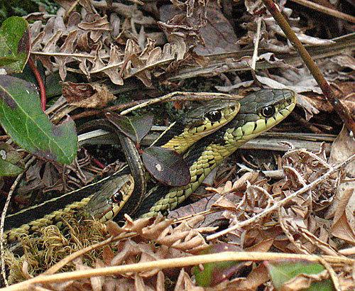 snakeorgy.jpg