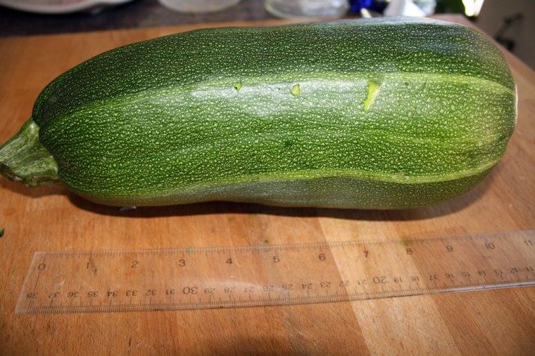 zucchini01-1.5kg.jpg