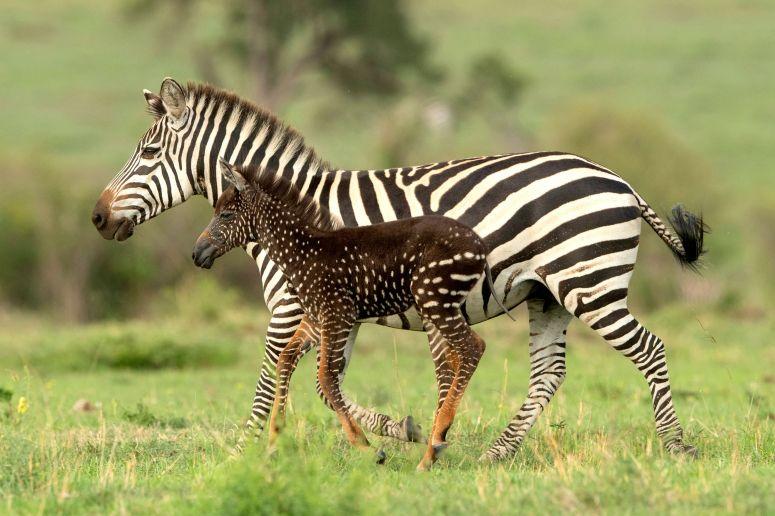 spotted_zebra_baby-1.jpg