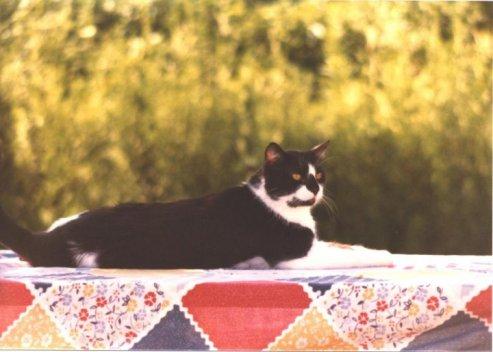 sylvestercat
